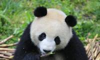 Two pandas arrive in Berlin from China